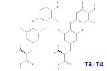 T3 T4